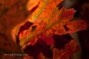 Fall foliage contest  on Fine Art America